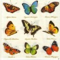 Салфетка для декупажа Бабочки, SD94