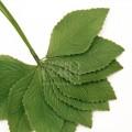 Листья розы, зеленые, размер 3.5 х 6см, 12 шт