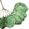 Листья розы, зеленый бархат,  4х2,7 см, 12 шт